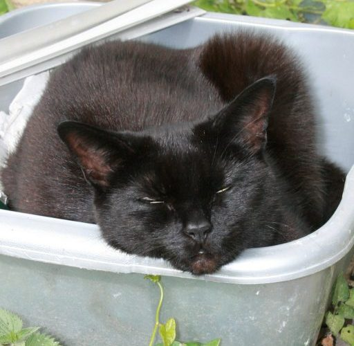 black, cat, asleep, box, lazy,